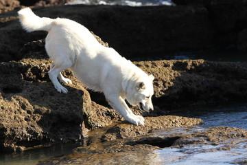 Weisser Hund klettert in den Felsen