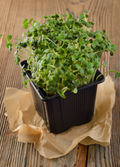 Cress salad on  wooden background
