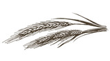 wheat vector logo design template. food or grain icon.