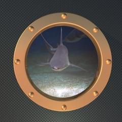 Shark on the porthole