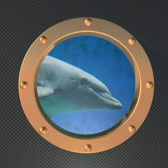 Dolphin on the porthole