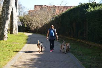 mujer paseando perros