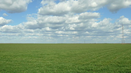 Wheat field in early spring with beautiful sky