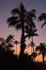 Siluett av en palm
