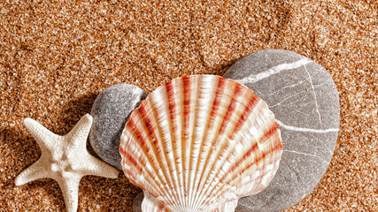 Summer trip still life over sand. Shellfish and starfish