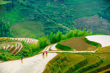 Yaoshan Mountain in Gulin, China Rice Terraces