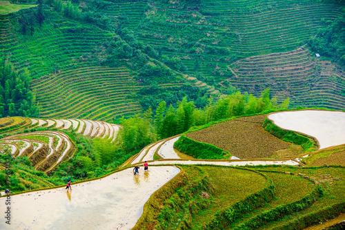 Yaoshan Mountain in Gulin, China Rice Terraces