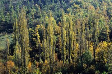 bosco foresta alberi alto fusto
