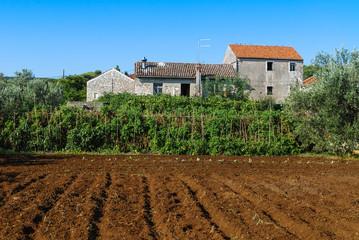 Acker mit Gemuese und Bauernhof