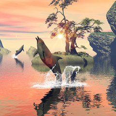 Dolphin jumping and playing in the sunset