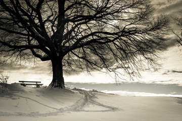bench under a tree (119)