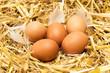 Leinwanddruck Bild - brown eggs in hay