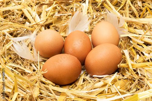 Leinwanddruck Bild brown eggs in hay