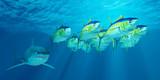 Yellowfin Tuna School poster