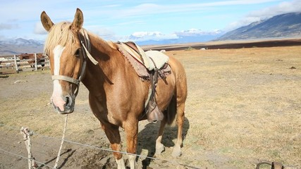 Horse waiting to go for ride in Patagonian farmland