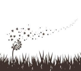 grass with dandelion background
