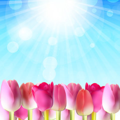 Beautiful Pink Tulips Against Shiny Sky Vector Illustration