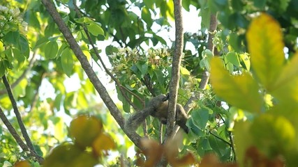 squirrel is taking and eating plant for food on the tree