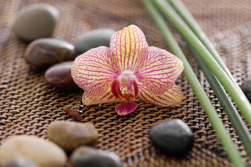 orchid and zen Stones on bamboo stick straw mat
