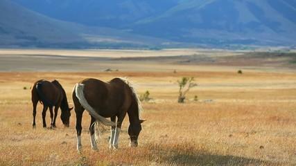 Horses grazing in argentinian farmland
