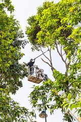 Worker on crane cutting tree branches with a chain saw
