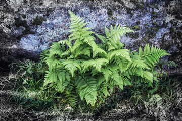 Green fern on natural background