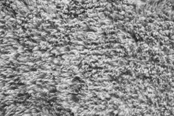 Gray fur