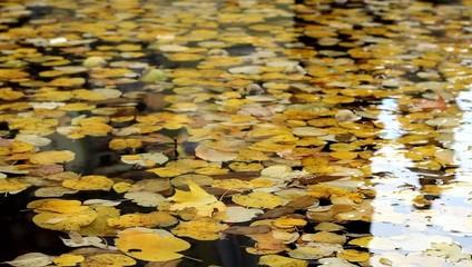 Autumn Foliage Floating