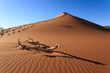 Red dune - 79672318