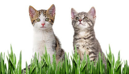 cute kittens isolated on white