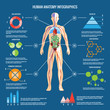 Human Body Anatomy Infographic Design - 79673711