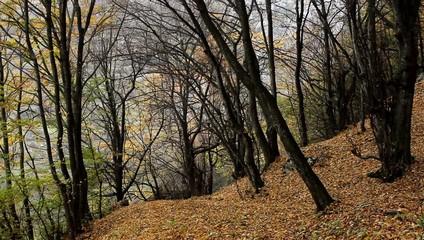 Fallen Leaves on Path