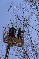 Men, mounted on a forklift, trimming a tree