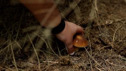 Forest Mushroom Foraging