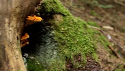 Fungus Grown on Trunk
