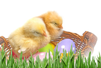 easter eggs in a basket and two chickens