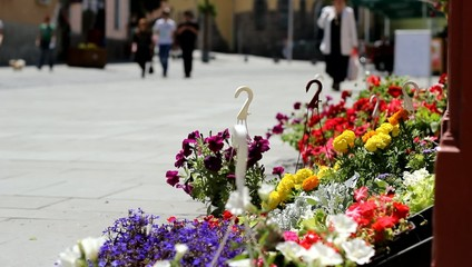 People and Flowers Street View