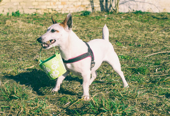 Dog helps in garden and brings bucket