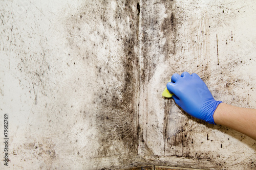 Hand cleans mold in the house - 79682769