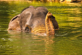 elephant bathing in the river, Asia, Sumatra