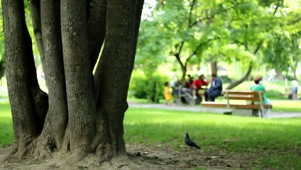 Tree and People in the Park