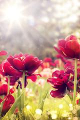 art wild flowers covered with dew in the sunlight © Konstiantyn