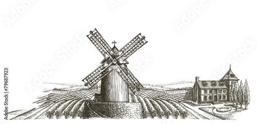 harvest vector logo design template. farm or organic farming - 79687923