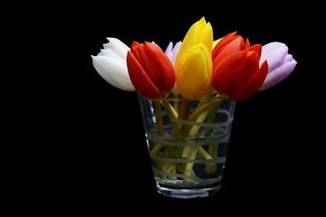 tulipani nel bicchiere-Glass of tulips