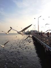 seagull imigration