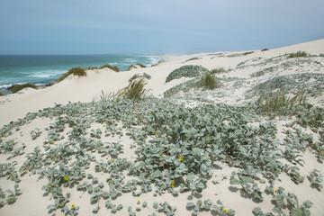 Desert dunes in De hoop nature reserve