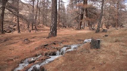 Wide shot of spring brook
