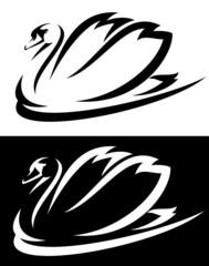 mute swan (Cygnus olor)  bird black and white design
