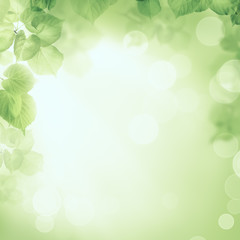Abstract greenery foliage morning sunlight background