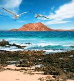 Wild seashore in Fuerteventura - 79692339